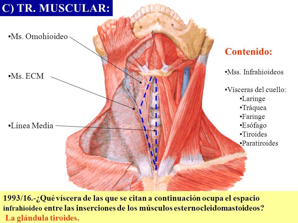 C) TR. MUSCULAR: Contenido: Ms. Omohioideo Ms. ECM Línea Media