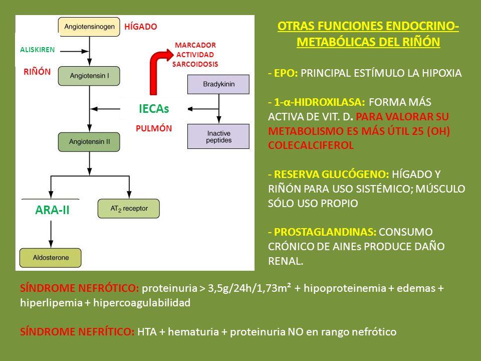 OTRAS FUNCIONES ENDOCRINO-METABÓLICAS DEL RIÑÓN IECAs ARA-II