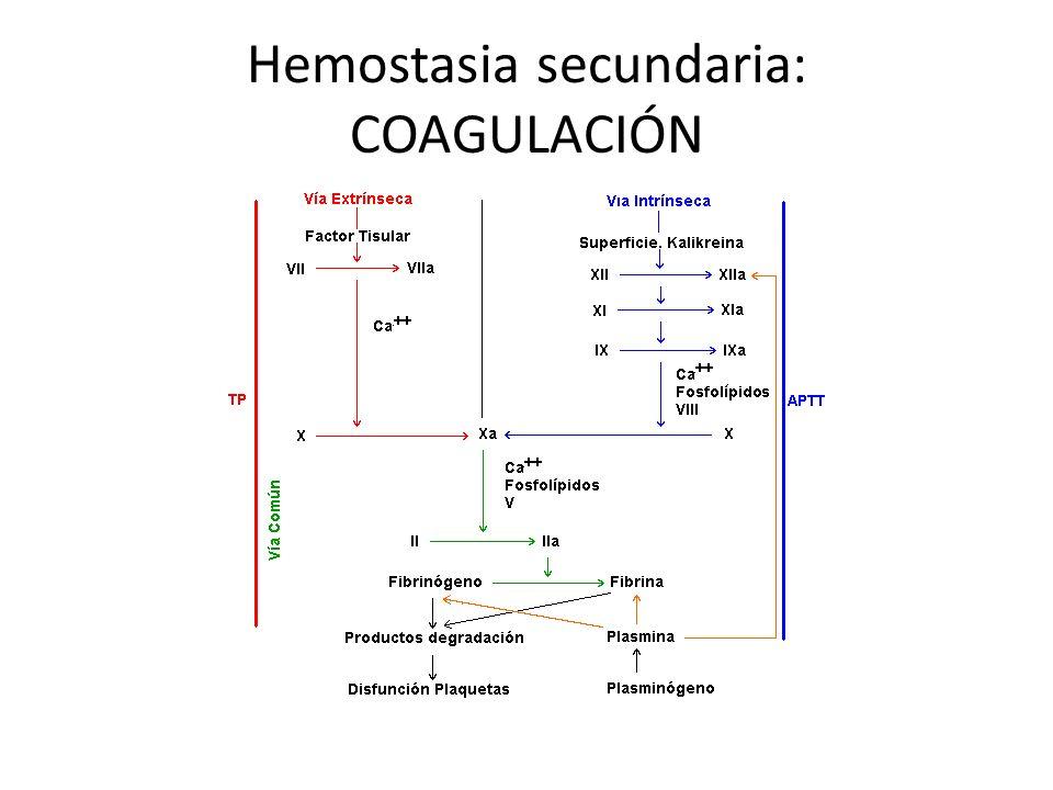 Hemostasia secundaria: COAGULACIÓN