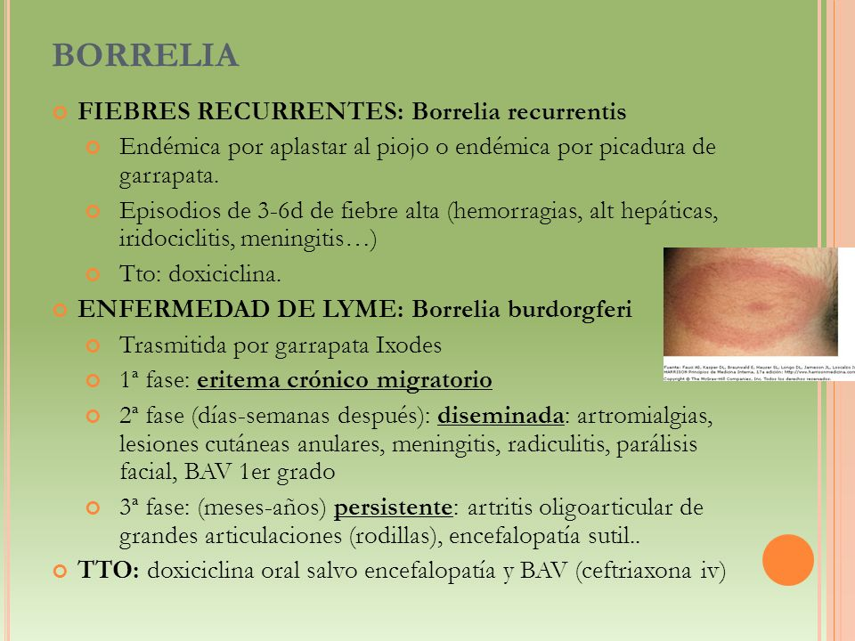 BORRELIA FIEBRES RECURRENTES: Borrelia recurrentis