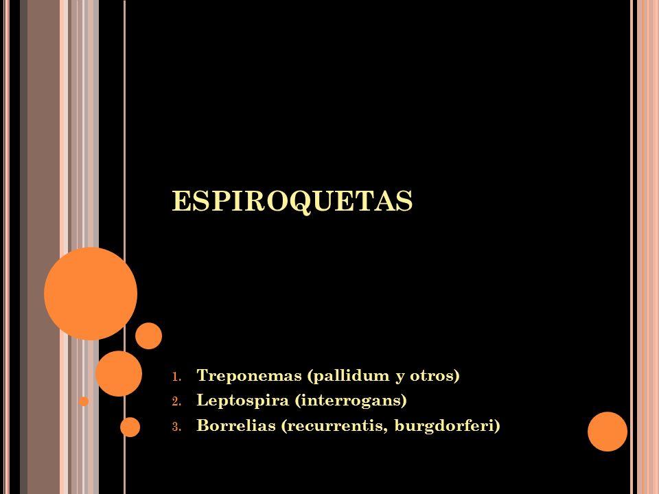 ESPIROQUETAS Treponemas (pallidum y otros) Leptospira (interrogans)