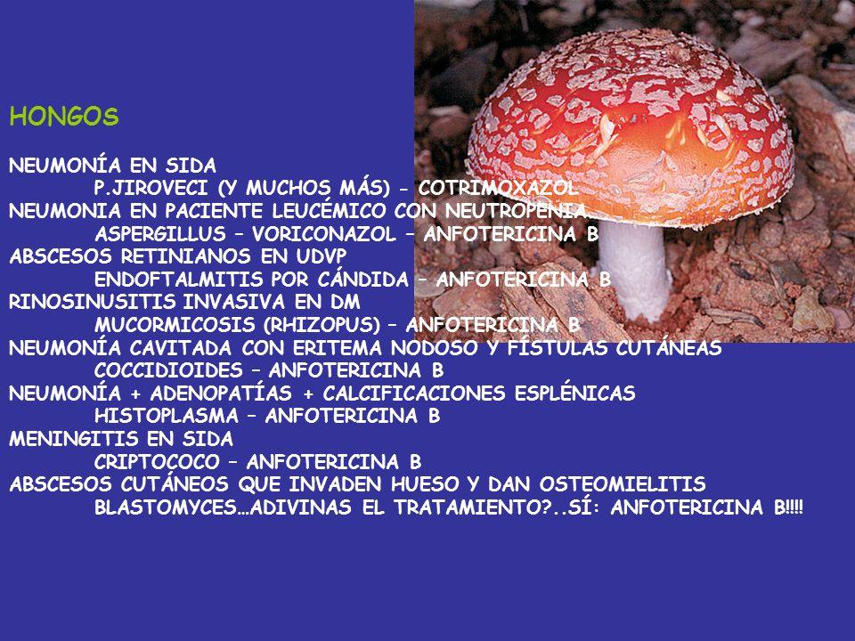 HONGOS NEUMONÍA EN SIDA P.JIROVECI (Y MUCHOS MÁS) - COTRIMOXAZOL