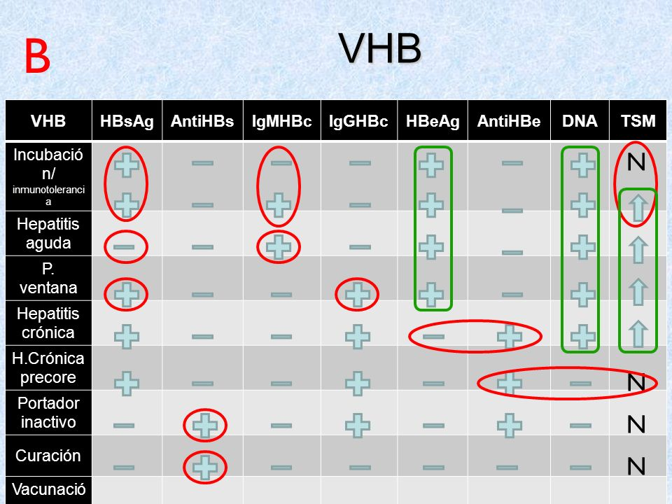 B VHB N N N N VHB DNA TSM HBsAg AntiHBs IgMHBc IgGHBc HBeAg AntiHBe