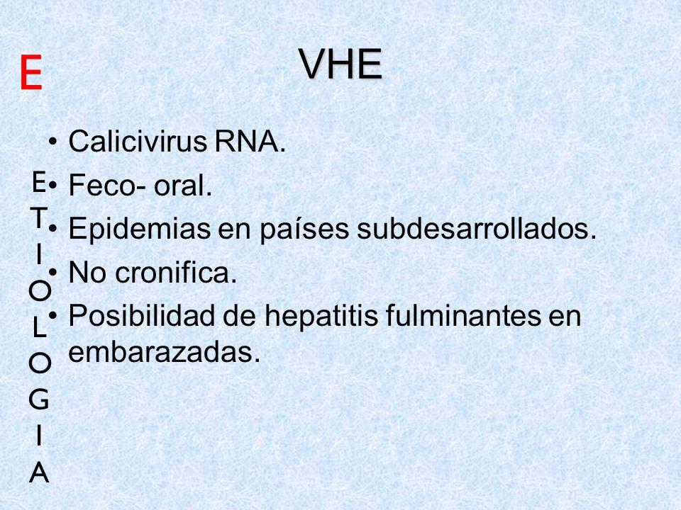 E VHE Calicivirus RNA. Feco- oral. E