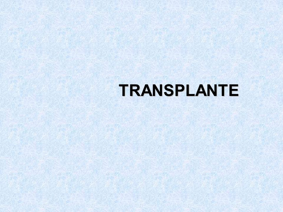 TRANSPLANTE 181