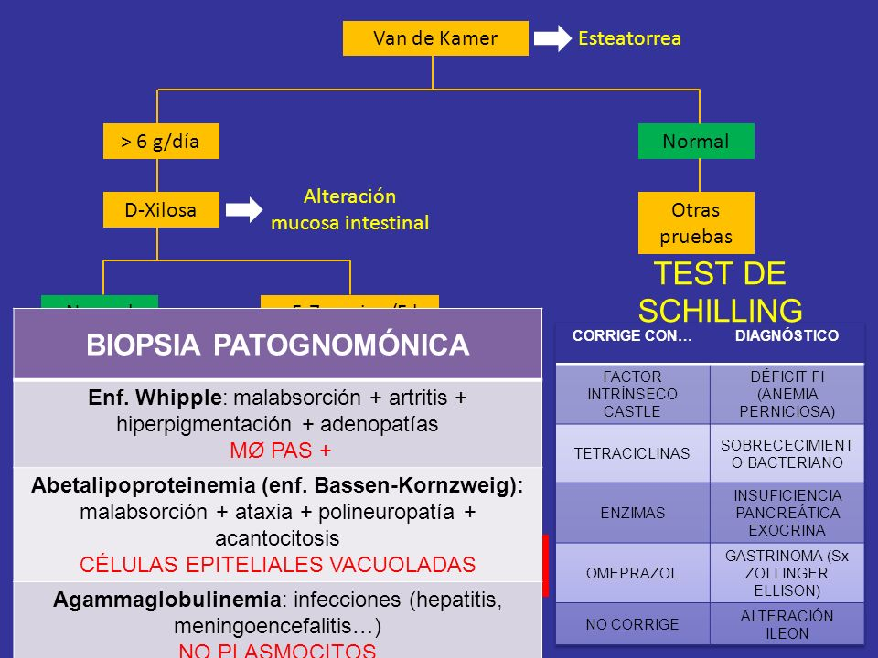 TEST DE SCHILLING BIOPSIA PATOGNOMÓNICA Van de Kamer Esteatorrea