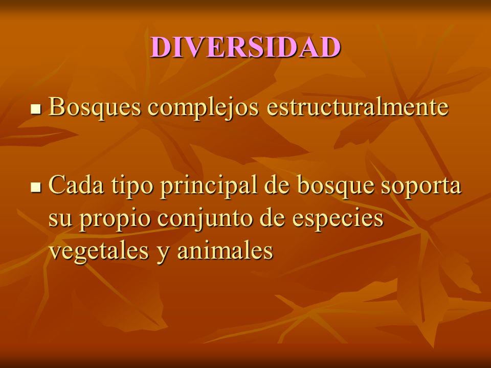 DIVERSIDAD Bosques complejos estructuralmente