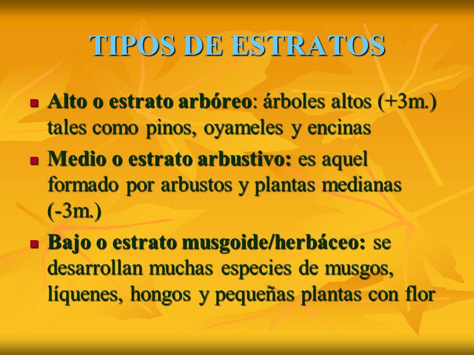 TIPOS DE ESTRATOS Alto o estrato arbóreo: árboles altos (+3m.) tales como pinos, oyameles y encinas.