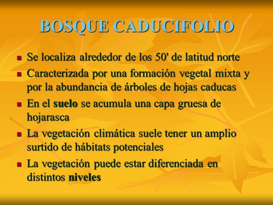 BOSQUE CADUCIFOLIO Se localiza alrededor de los 50 de latitud norte