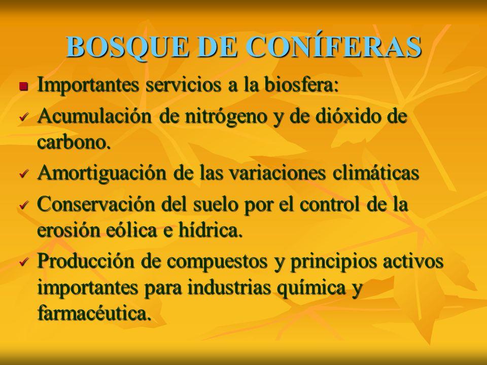 BOSQUE DE CONÍFERAS Importantes servicios a la biosfera: