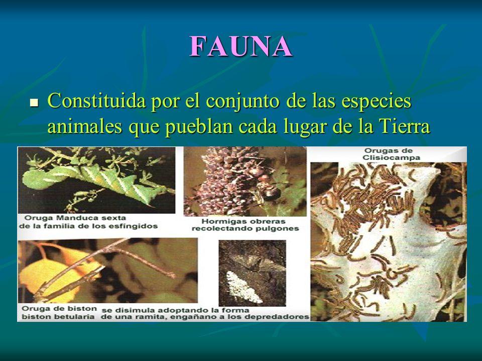 FAUNA Constituida por el conjunto de las especies animales que pueblan cada lugar de la Tierra