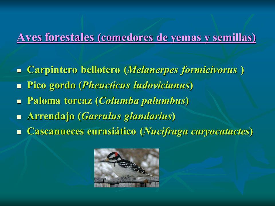 Aves forestales (comedores de yemas y semillas)