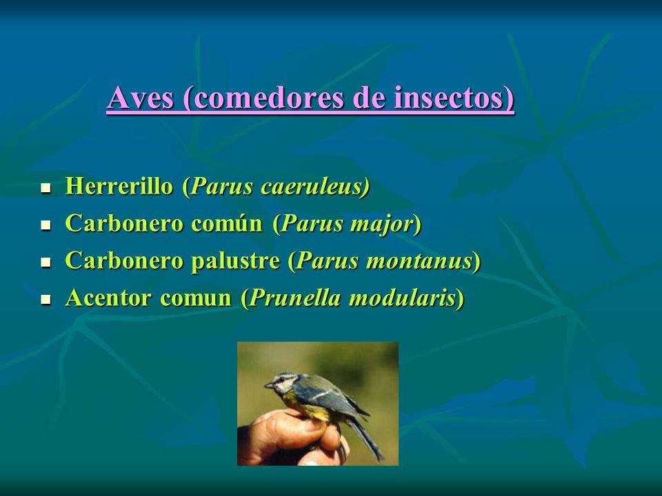 Aves (comedores de insectos)
