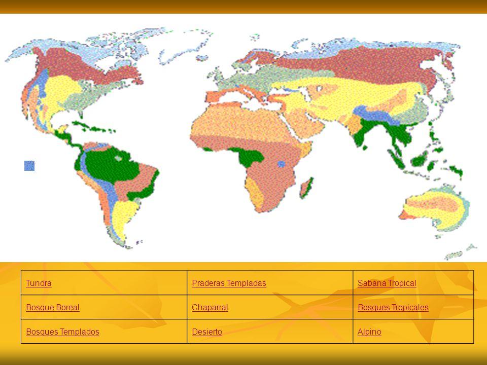 Tundra Praderas Templadas. Sabana Tropical. Bosque Boreal. Chaparral. Bosques Tropicales. Bosques Templados.