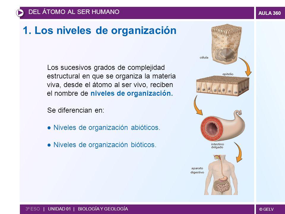 1. Los niveles de organización