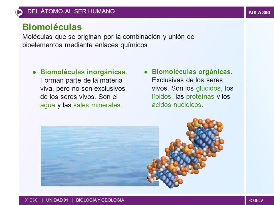 DEL ÁTOMO AL SER HUMANO Biomoléculas. Moléculas que se originan por la combinación y unión de bioelementos mediante enlaces químicos.
