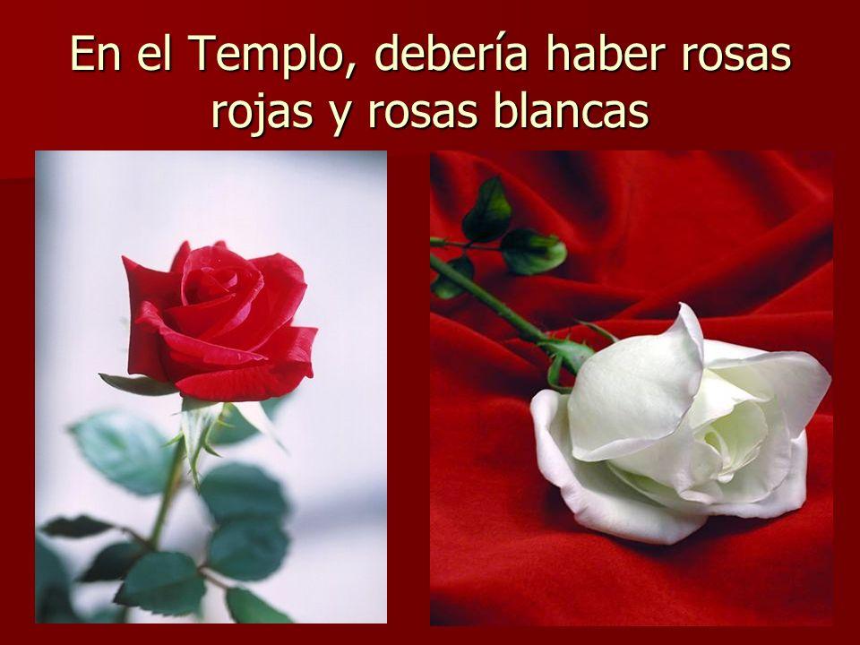 En el Templo, debería haber rosas rojas y rosas blancas