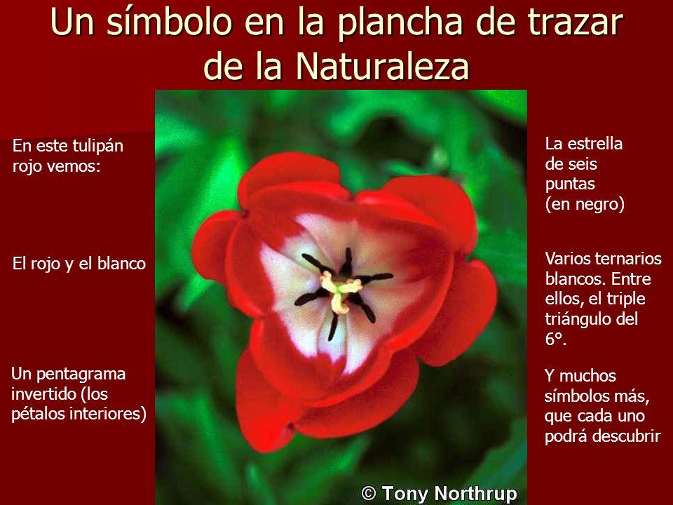Un símbolo en la plancha de trazar de la Naturaleza