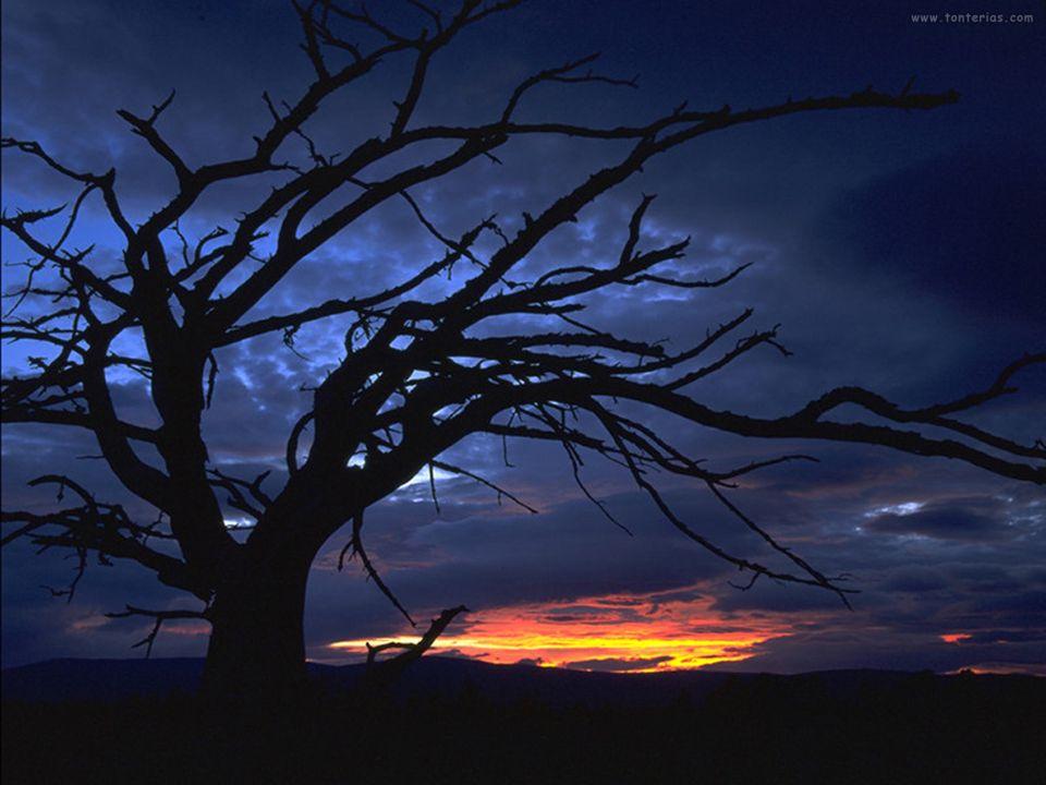 Los trabajos se abren al amanecer ( al romper el alba ) y se cierran al oscurecer, para que cada cual pueda adquirir nuevas fuerzas con el descanso .