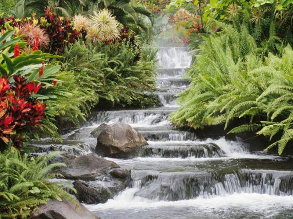 La Naturaleza La idea, en general, es la revalorización de la Naturaleza, del mundo externo, de la Creación.