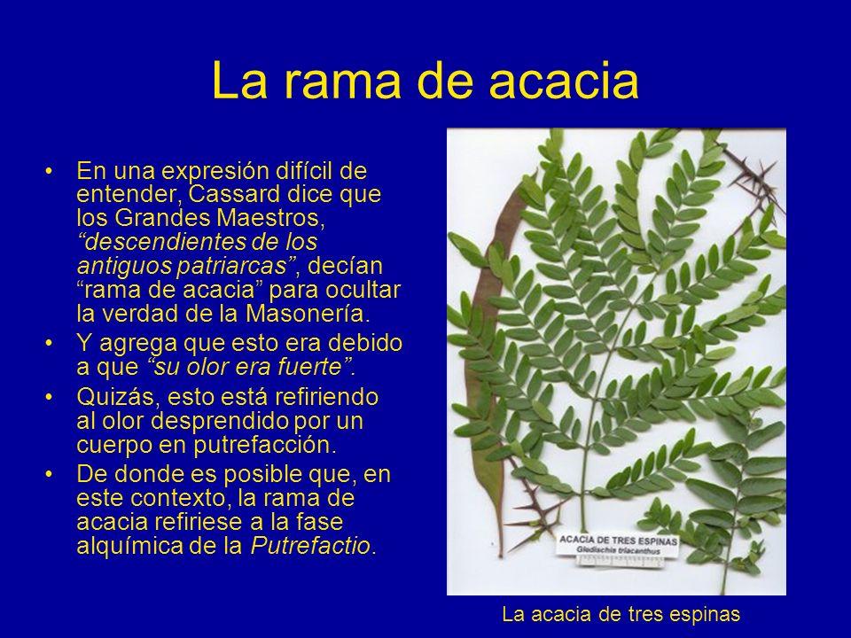 La rama de acacia