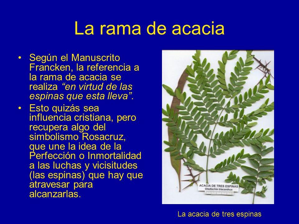 La rama de acacia Según el Manuscrito Francken, la referencia a la rama de acacia se realiza en virtud de las espinas que esta lleva .