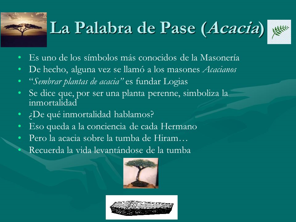 La Palabra de Pase (Acacia)