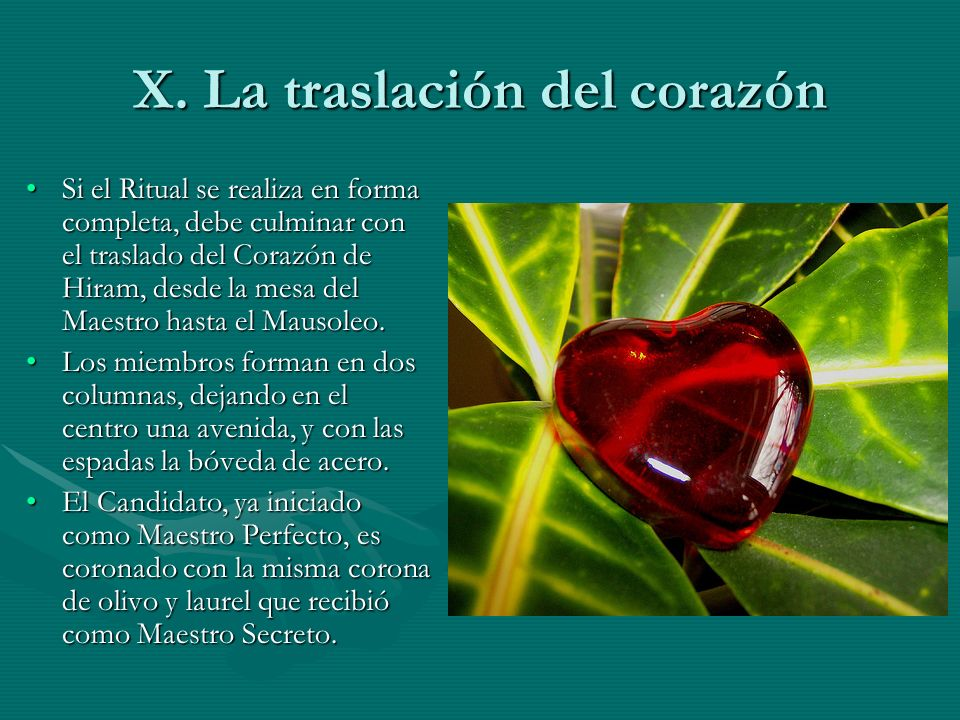 X. La traslación del corazón