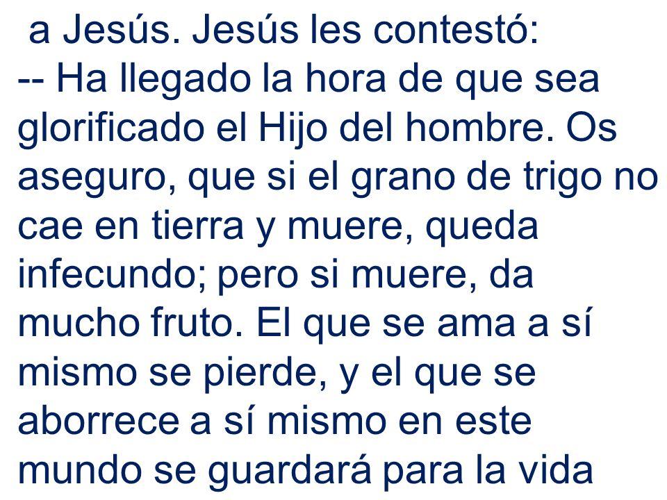 a Jesús. Jesús les contestó: