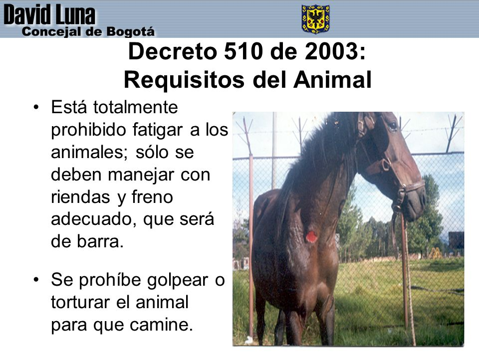 Decreto 510 de 2003: Requisitos del Animal