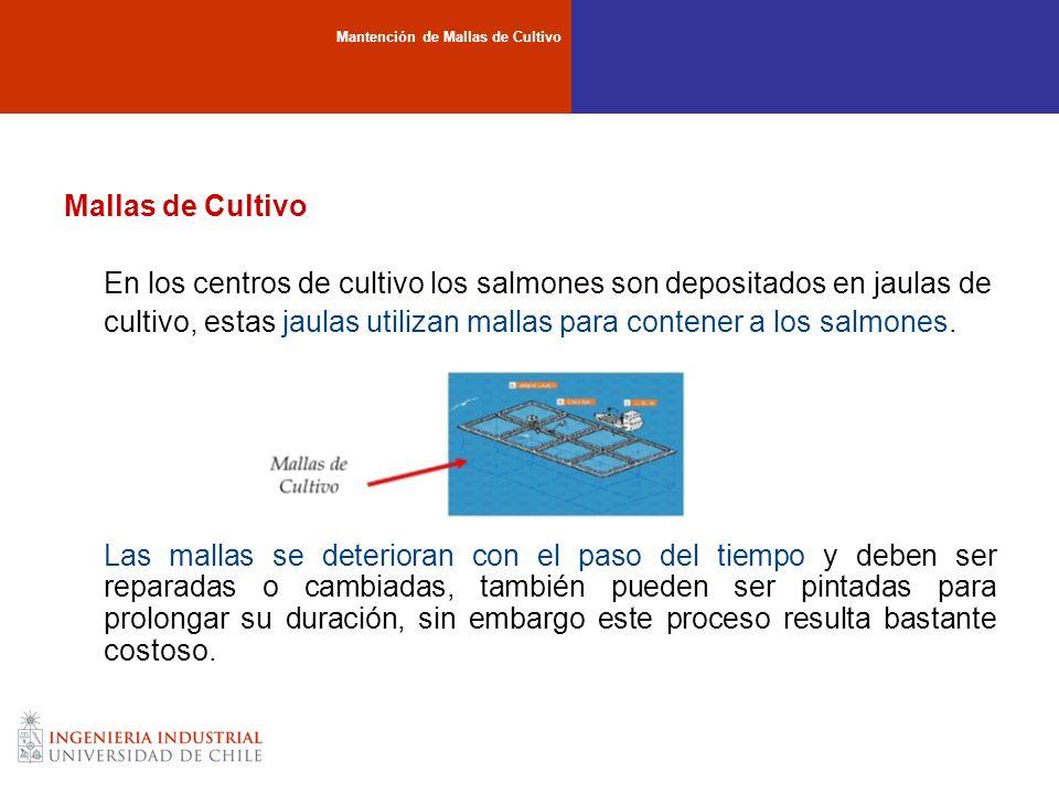 En los centros de cultivo los salmones son depositados en jaulas de