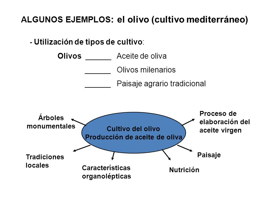 Producción de aceite de oliva