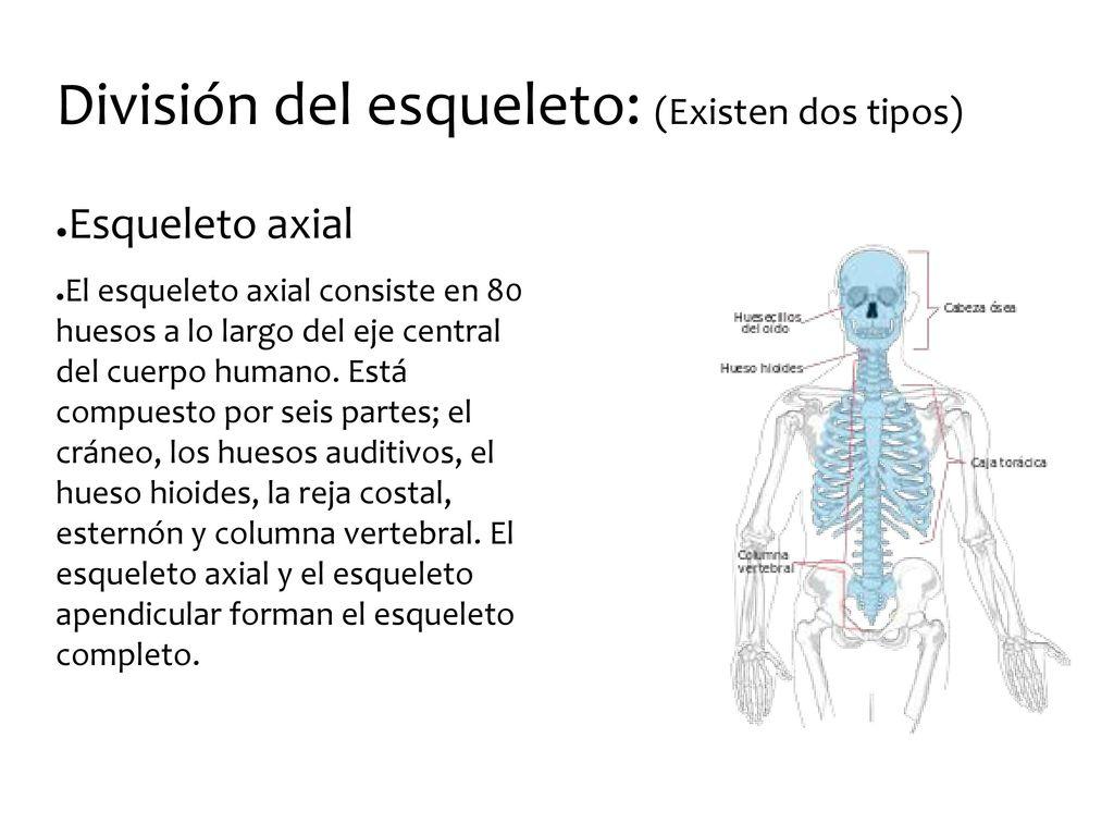 Contemporáneo Diagrama De Columna Vertebral Anatomía Humana ...