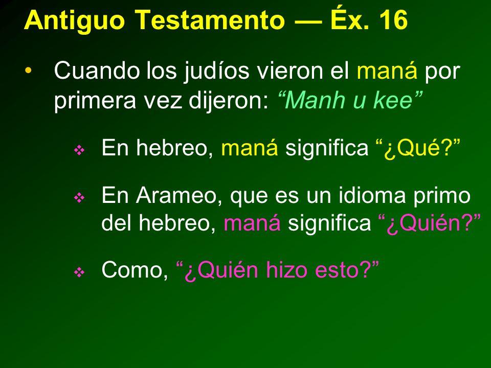 Antiguo Testamento — Éx. 16