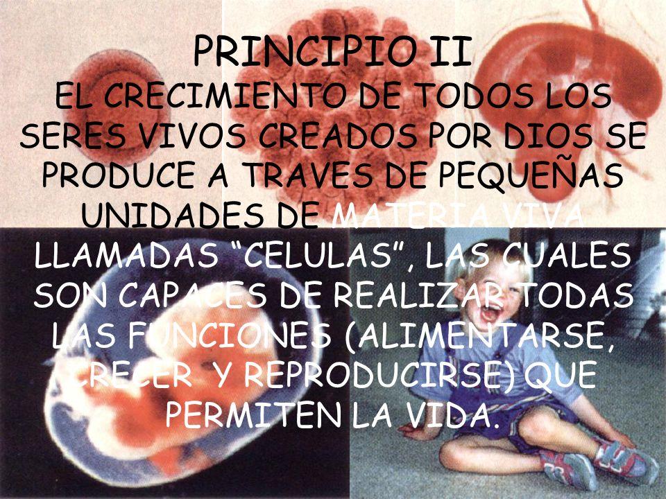 PRINCIPIO II EL CRECIMIENTO DE TODOS LOS SERES VIVOS CREADOS POR DIOS SE PRODUCE A TRAVES DE PEQUEÑAS UNIDADES DE MATERIA VIVA LLAMADAS CELULAS , LAS CUALES SON CAPACES DE REALIZAR TODAS LAS FUNCIONES (ALIMENTARSE, CRECER Y REPRODUCIRSE) QUE PERMITEN LA VIDA.