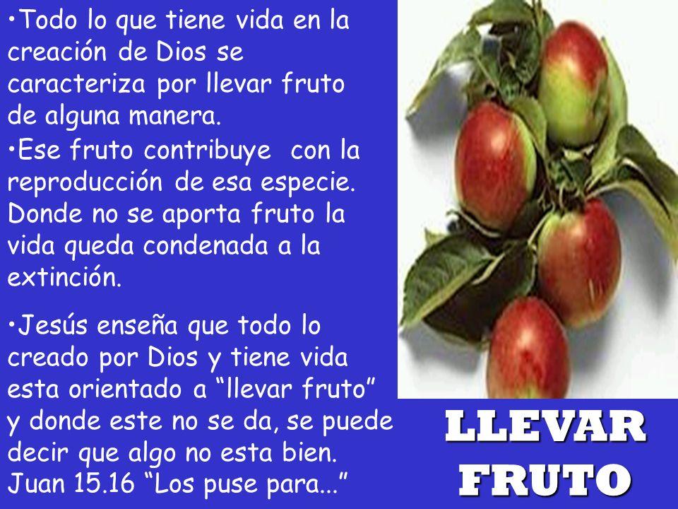 Todo lo que tiene vida en la creación de Dios se caracteriza por llevar fruto de alguna manera.