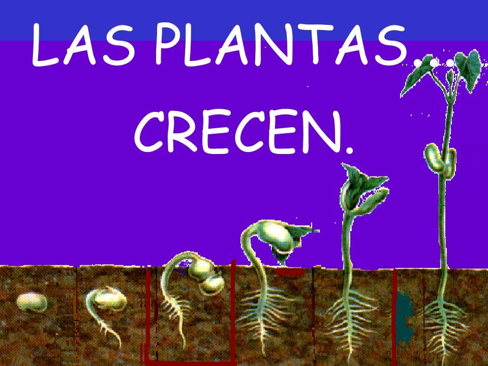 LAS PLANTAS... CRECEN.
