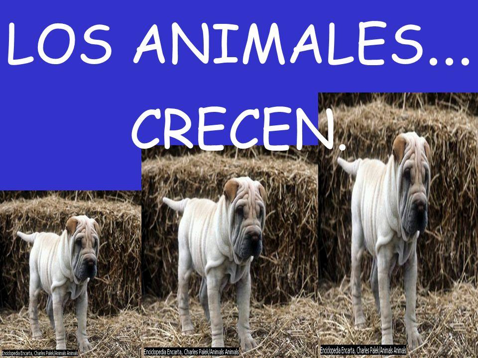 LOS ANIMALES... CRECEN.