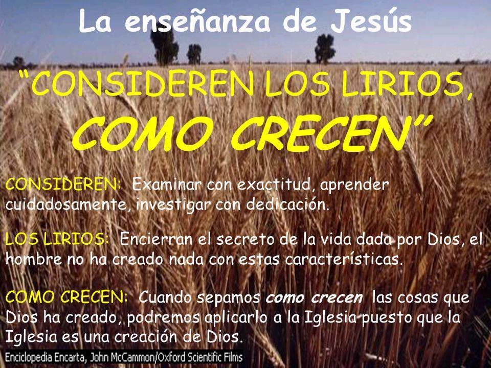 CONSIDEREN LOS LIRIOS, COMO CRECEN