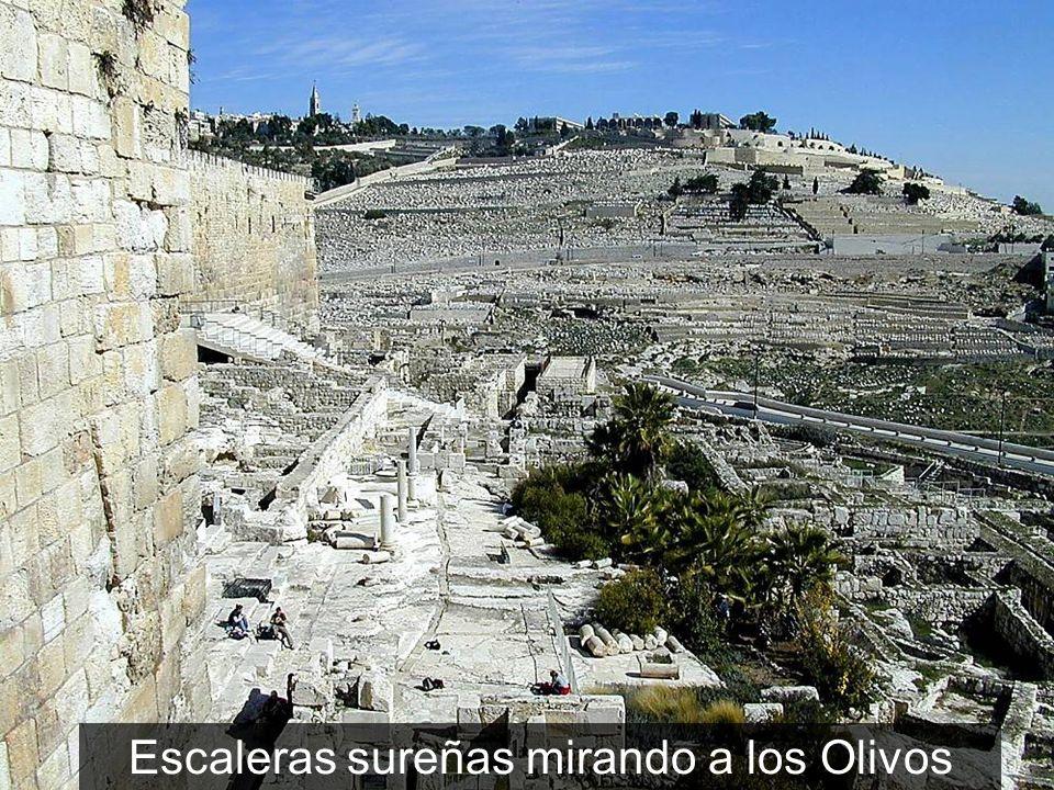 Escaleras sureñas mirando a los Olivos