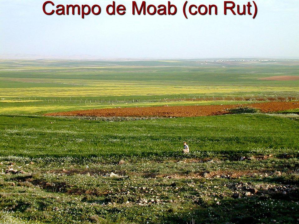 Campo de Moab (con Rut)