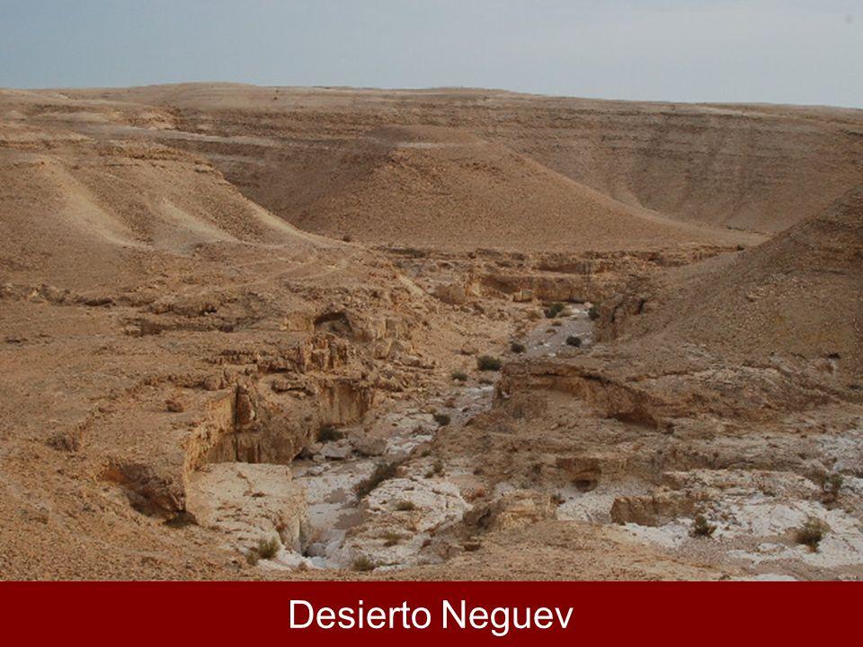 Desierto Neguev