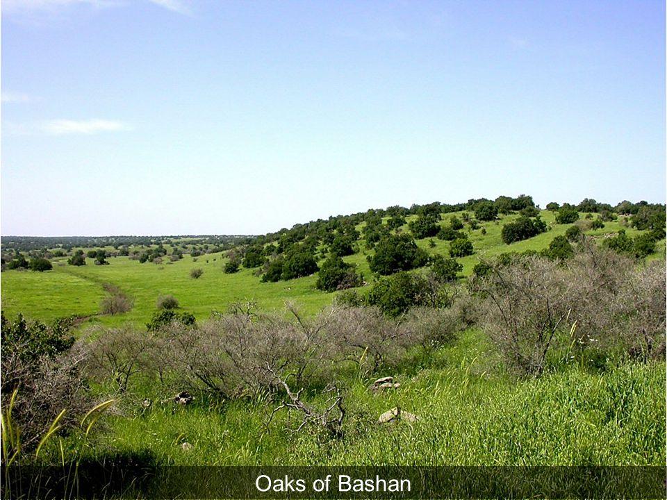 Oaks of Bashan Oaks of Bashan