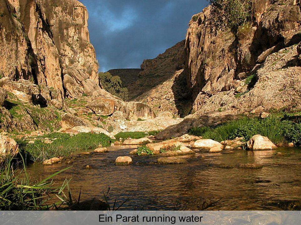 Ein Parat running water