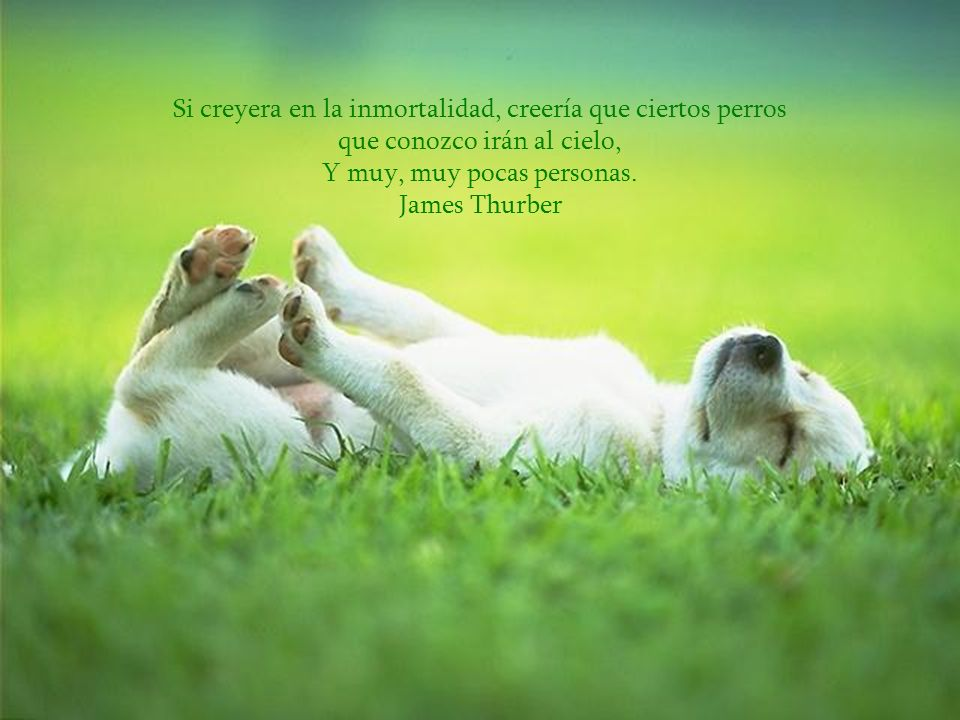 Y muy, muy pocas personas. James Thurber