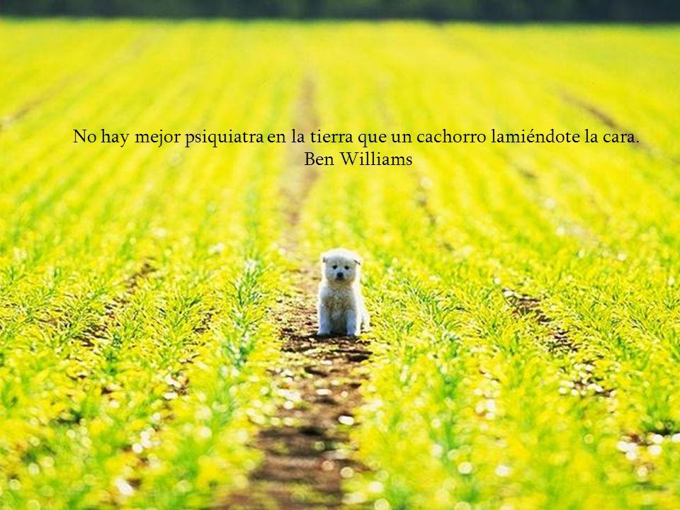 No hay mejor psiquiatra en la tierra que un cachorro lamiéndote la cara.