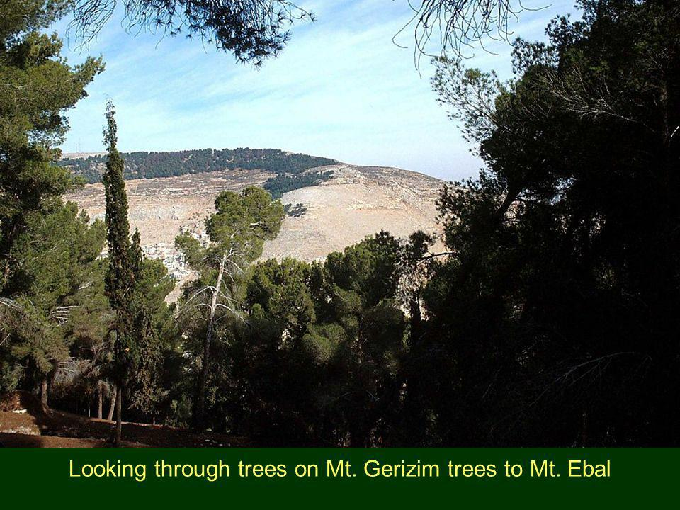 Looking through trees on Mt. Gerizim trees to Mt. Ebal