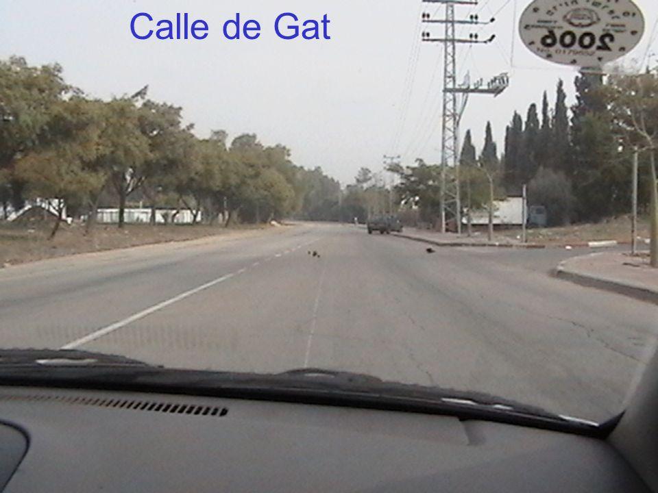Calle de Gat