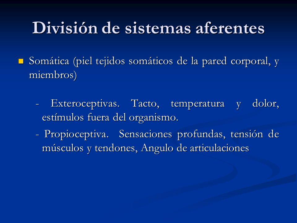 División de sistemas aferentes