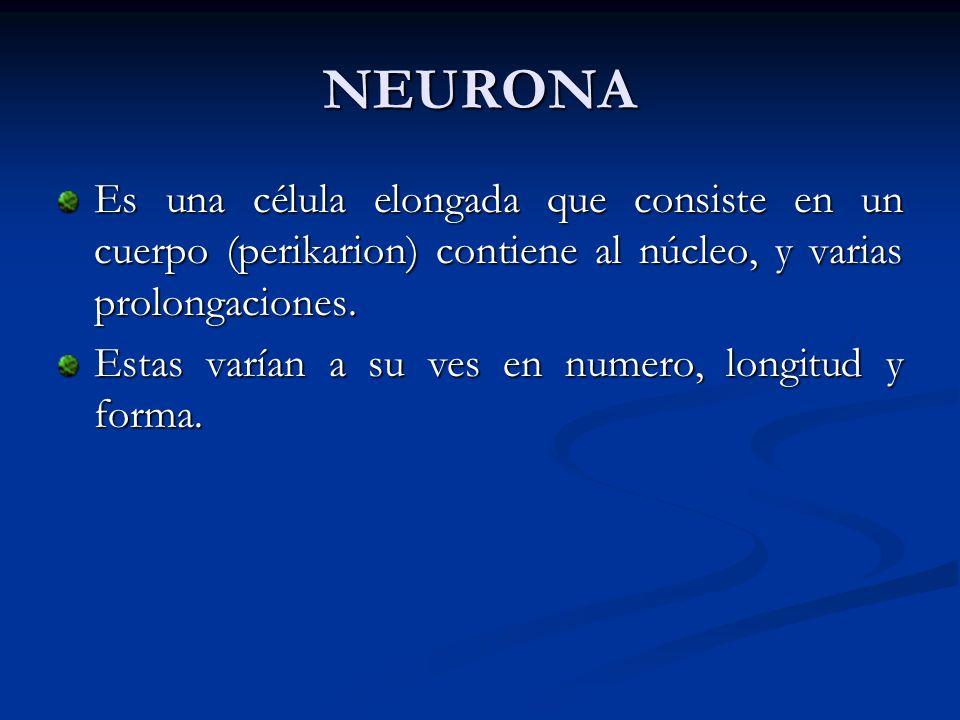NEURONA Es una célula elongada que consiste en un cuerpo (perikarion) contiene al núcleo, y varias prolongaciones.